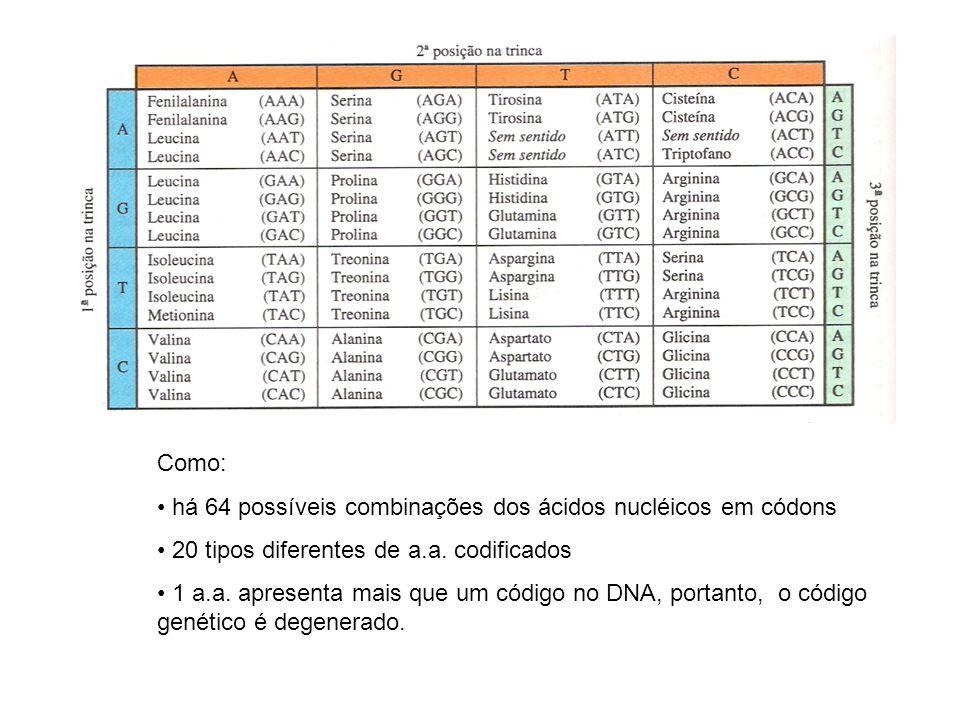 Como: há 64 possíveis combinações dos ácidos nucléicos em códons. 20 tipos diferentes de a.a. codificados.