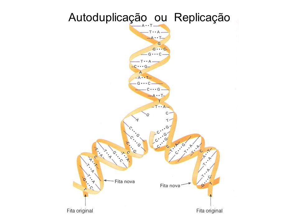 Autoduplicação ou Replicação