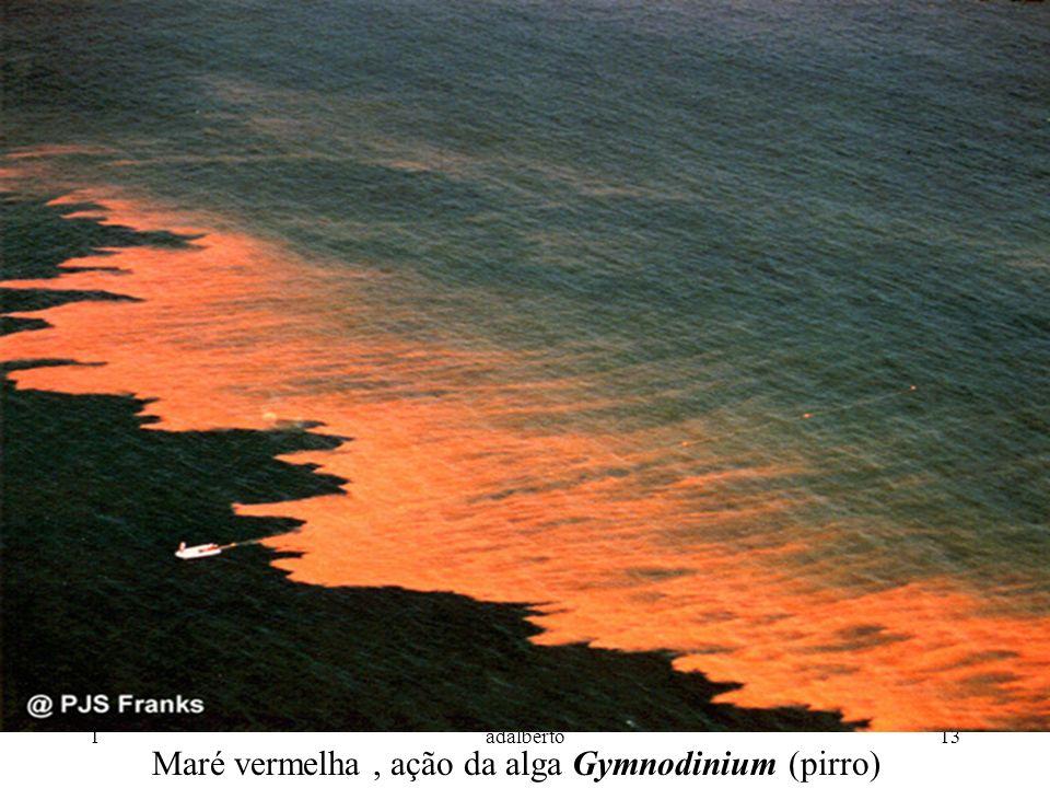 Maré vermelha , ação da alga Gymnodinium (pirro)
