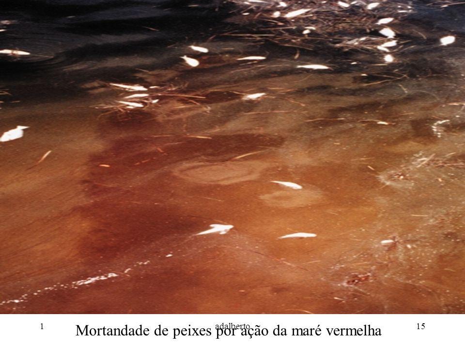 Mortandade de peixes por ação da maré vermelha