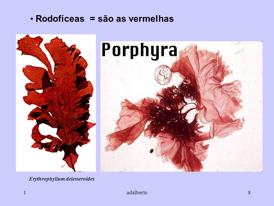 Erythrophyllum delesseroides