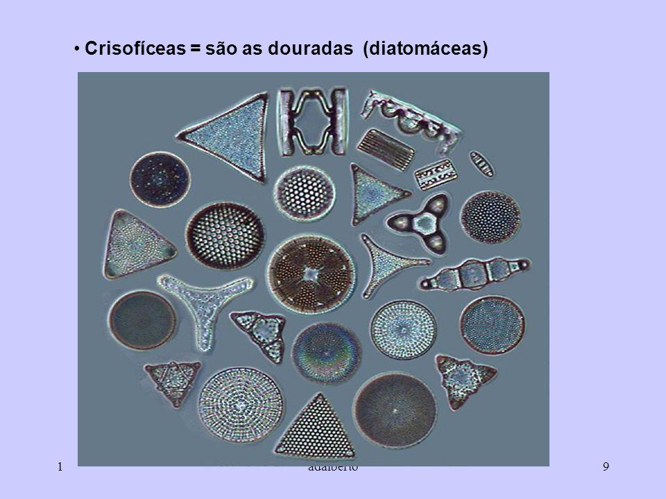 Crisofíceas = são as douradas (diatomáceas)