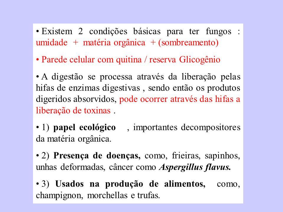 Existem 2 condições básicas para ter fungos : umidade + matéria orgânica + (sombreamento)