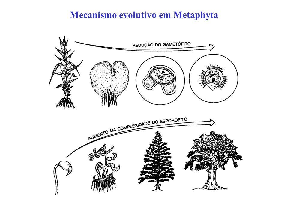 Mecanismo evolutivo em Metaphyta