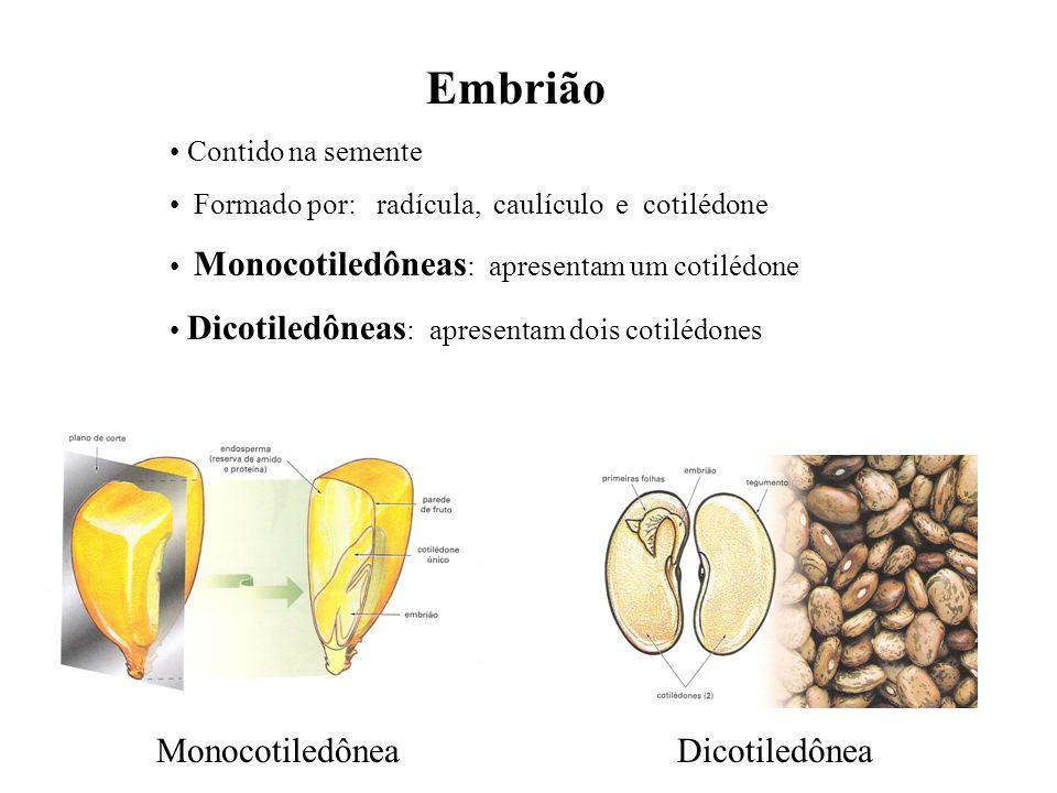 Embrião Monocotiledônea Dicotiledônea Contido na semente