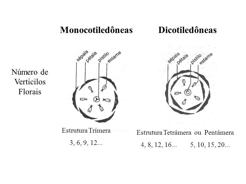 Monocotiledôneas Dicotiledôneas