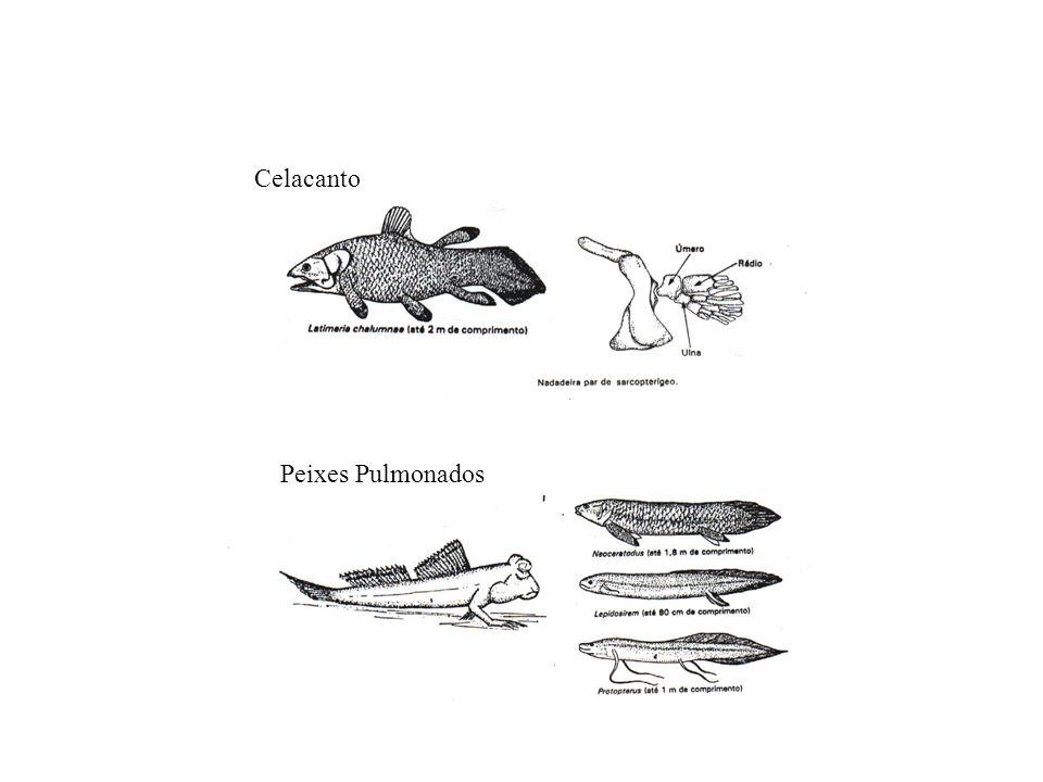 Celacanto Peixes Pulmonados