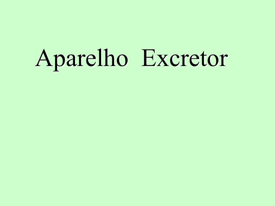 Aparelho Excretor