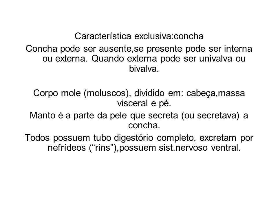 Característica exclusiva:concha