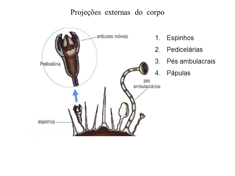 Projeções externas do corpo