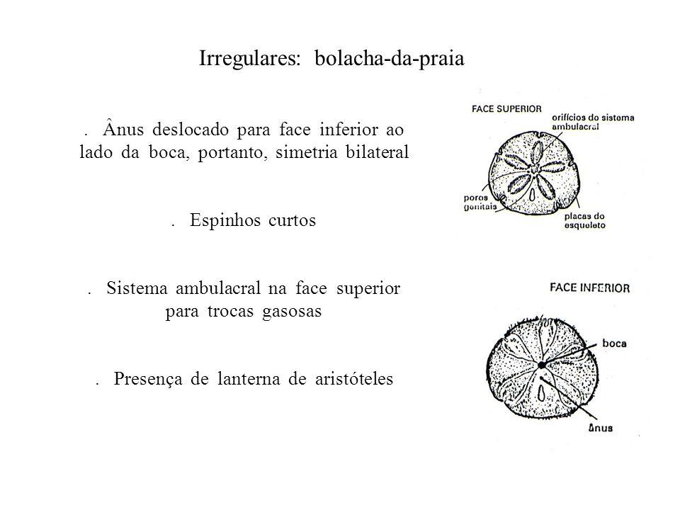 Irregulares: bolacha-da-praia