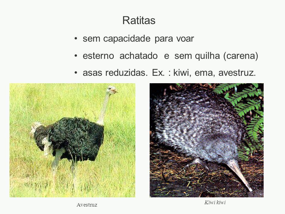 Ratitas sem capacidade para voar