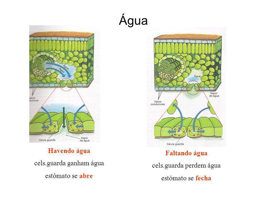 Água Havendo água Faltando água cels.guarda ganham água
