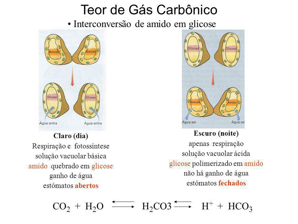 Teor de Gás Carbônico Interconversão de amido em glicose