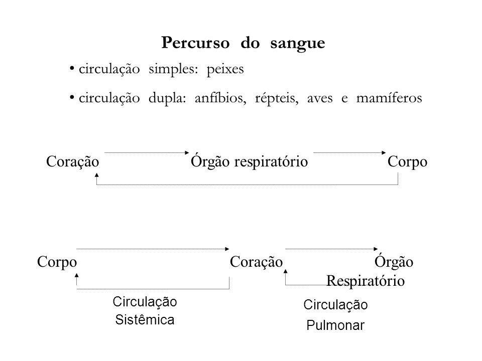 Coração Órgão respiratório Corpo