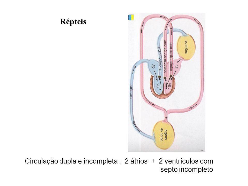 Répteis Circulação dupla e incompleta : 2 átrios + 2 ventrículos com septo incompleto