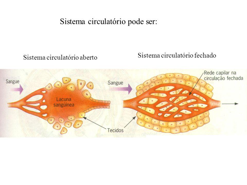 Sistema circulatório pode ser: