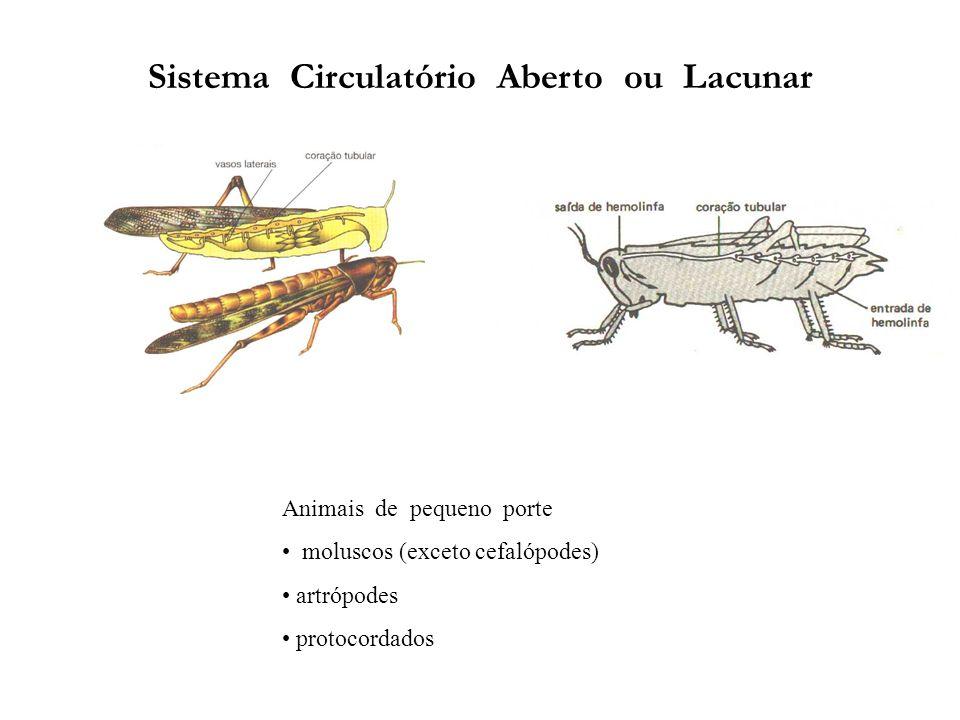 Sistema Circulatório Aberto ou Lacunar