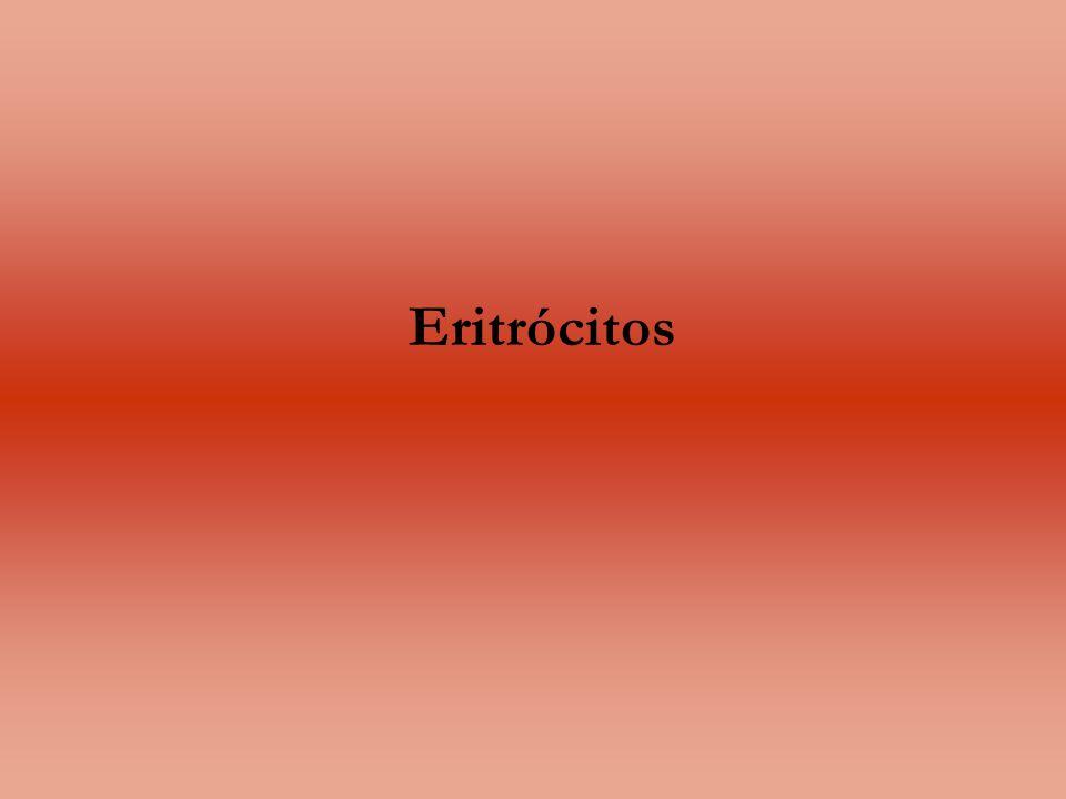 Eritrócitos