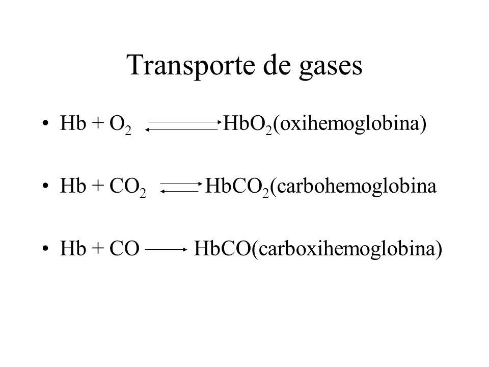 Transporte de gases Hb + O2 HbO2(oxihemoglobina)