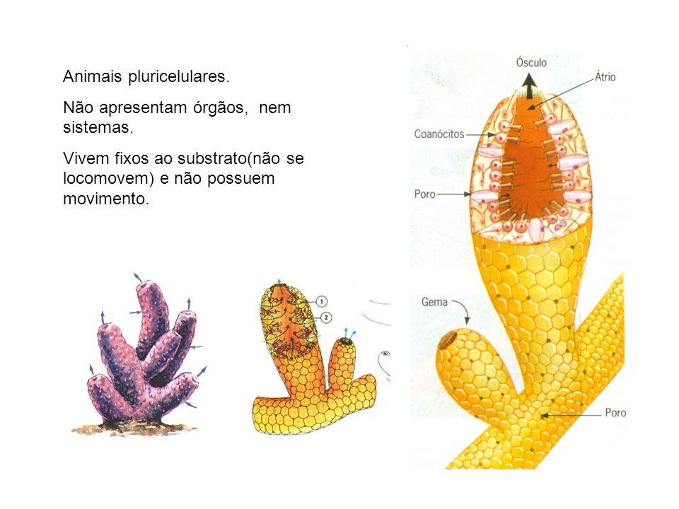 Animais pluricelulares.