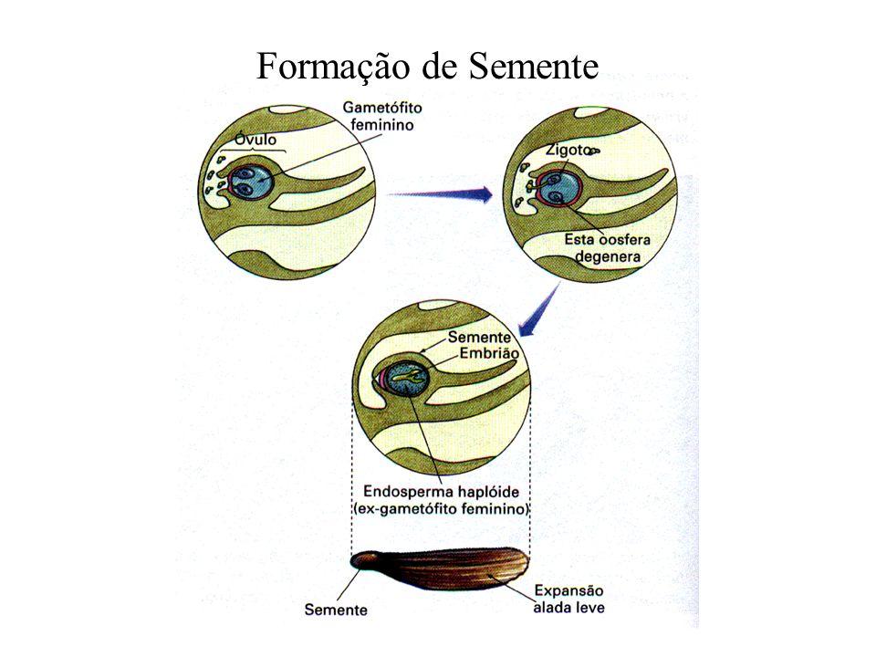 Formação de Semente