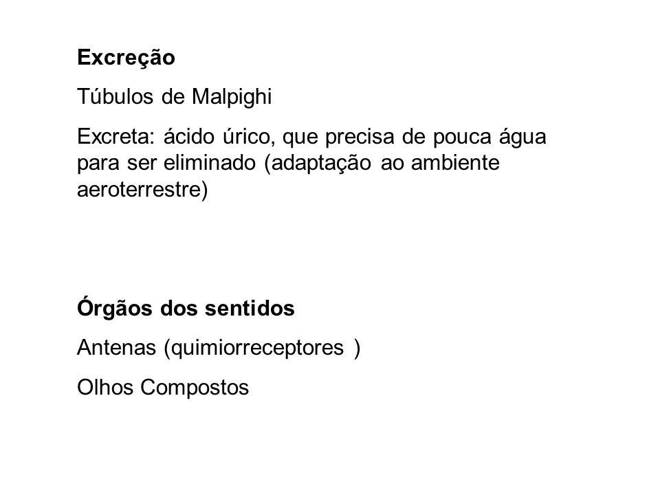 Excreção Túbulos de Malpighi. Excreta: ácido úrico, que precisa de pouca água para ser eliminado (adaptação ao ambiente aeroterrestre)