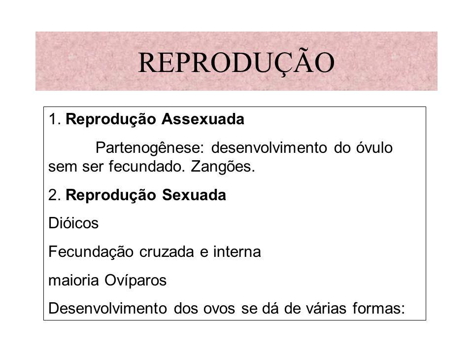 REPRODUÇÃO 1. Reprodução Assexuada