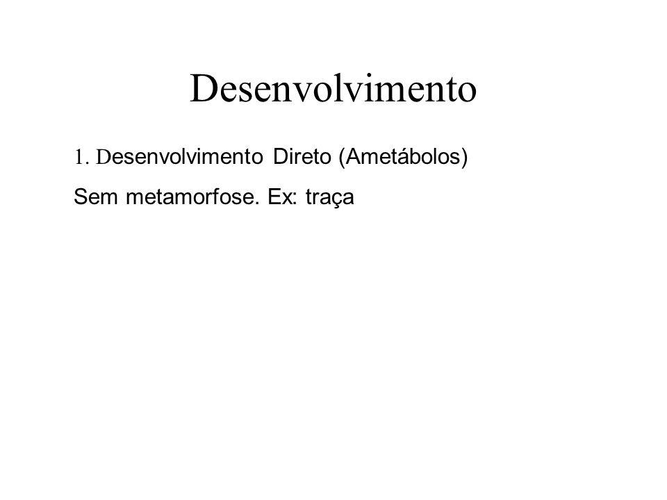 Desenvolvimento 1. Desenvolvimento Direto (Ametábolos)