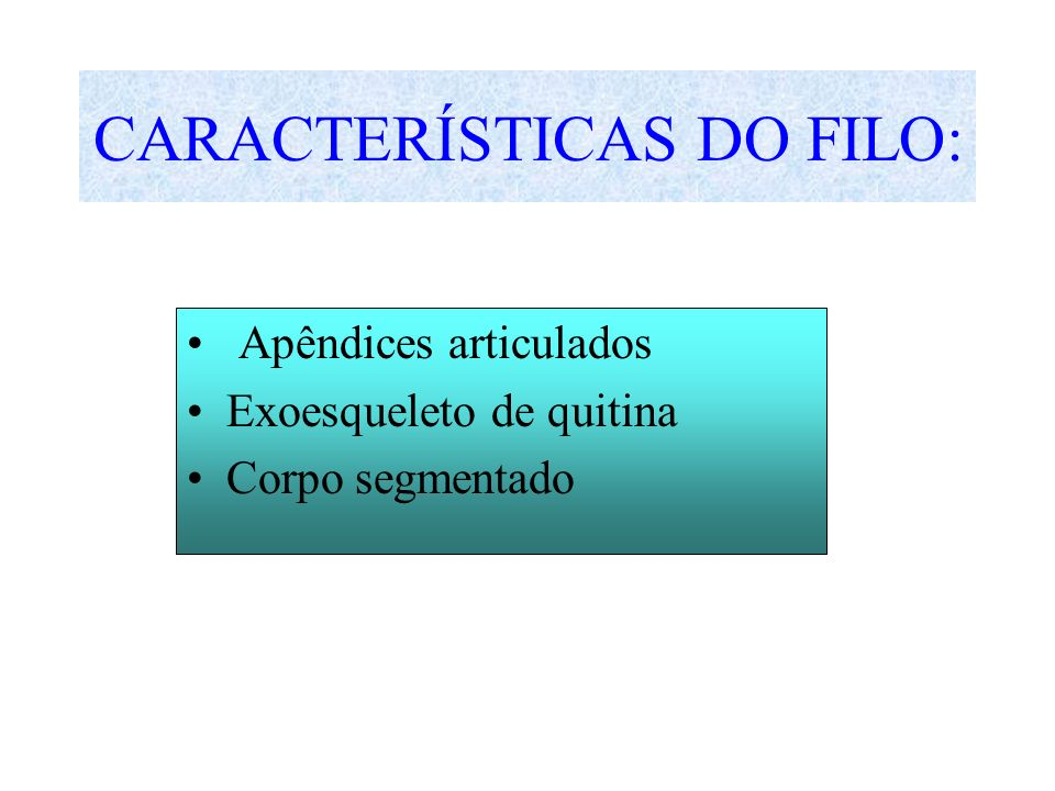CARACTERÍSTICAS DO FILO: