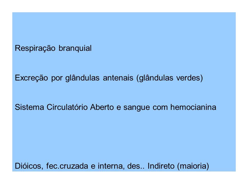 Respiração branquial Excreção por glândulas antenais (glândulas verdes) Sistema Circulatório Aberto e sangue com hemocianina.