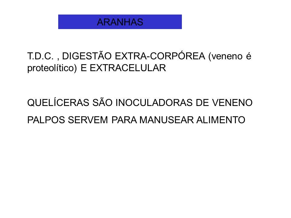 ARANHAS T.D.C. , DIGESTÃO EXTRA-CORPÓREA (veneno é proteolítico) E EXTRACELULAR. QUELÍCERAS SÃO INOCULADORAS DE VENENO.