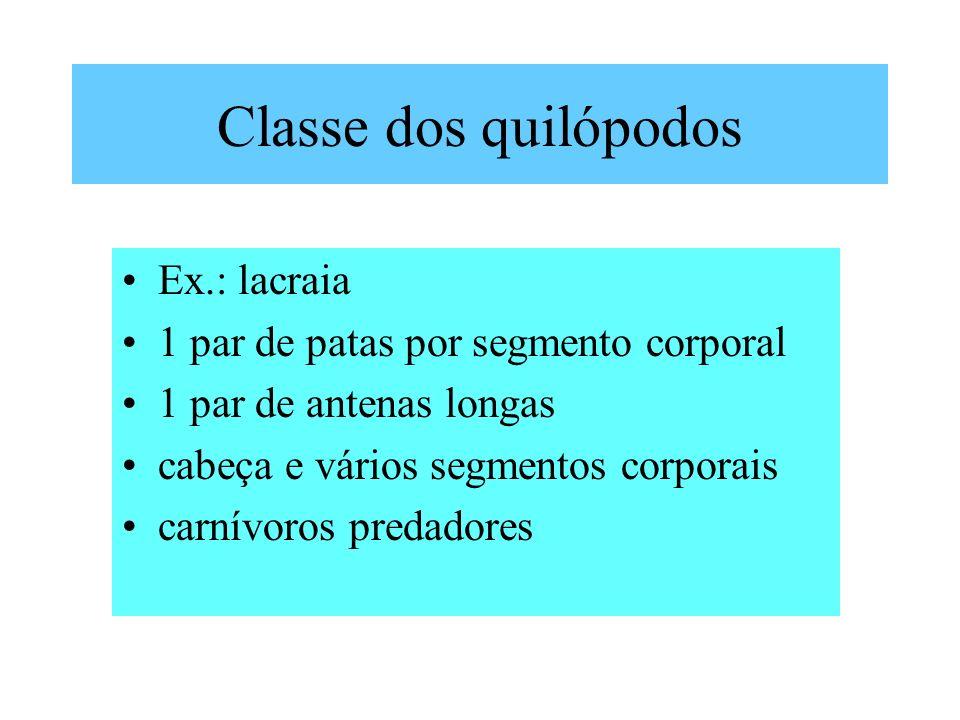 Classe dos quilópodos Ex.: lacraia
