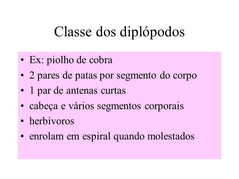 Classe dos diplópodos Ex: piolho de cobra