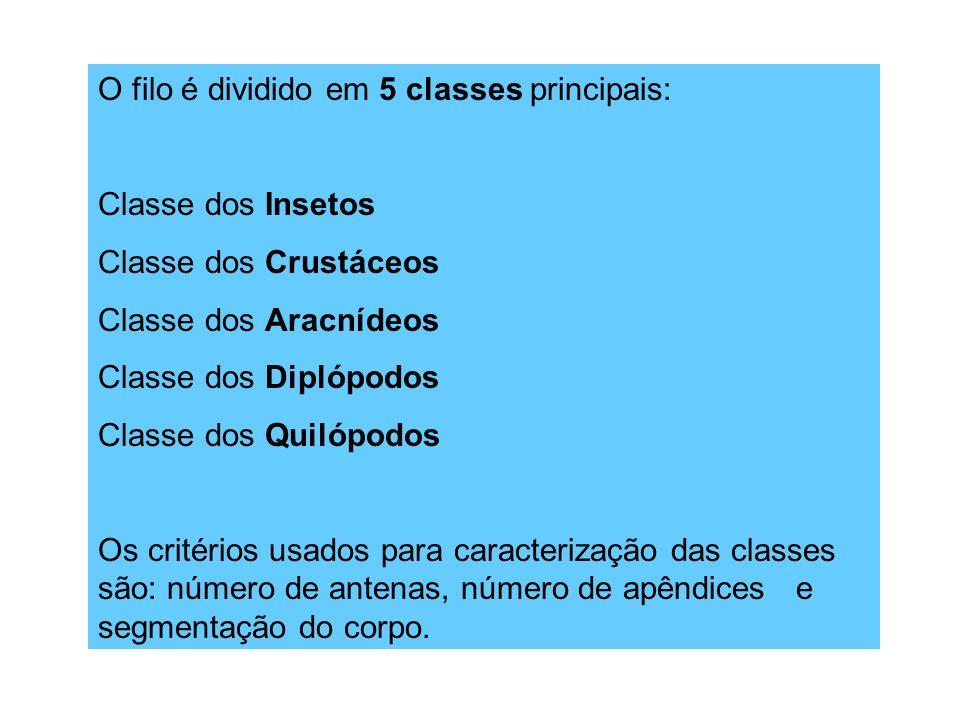 O filo é dividido em 5 classes principais: