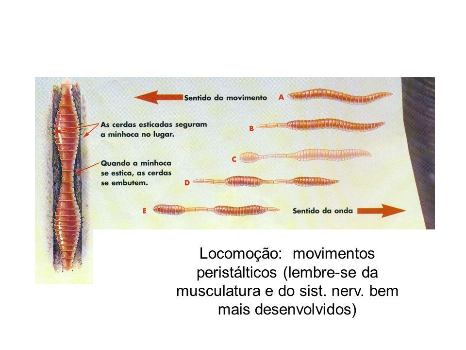 Locomoção: movimentos peristálticos (lembre-se da musculatura e do sist.