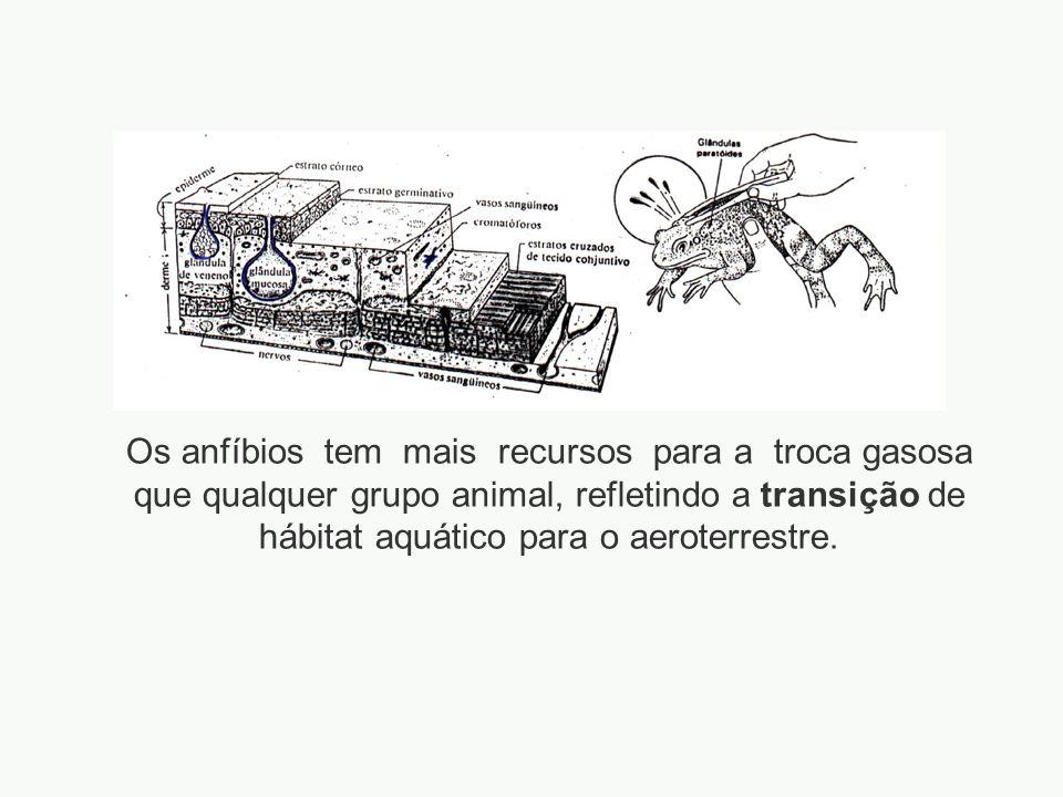 Os anfíbios tem mais recursos para a troca gasosa que qualquer grupo animal, refletindo a transição de hábitat aquático para o aeroterrestre.