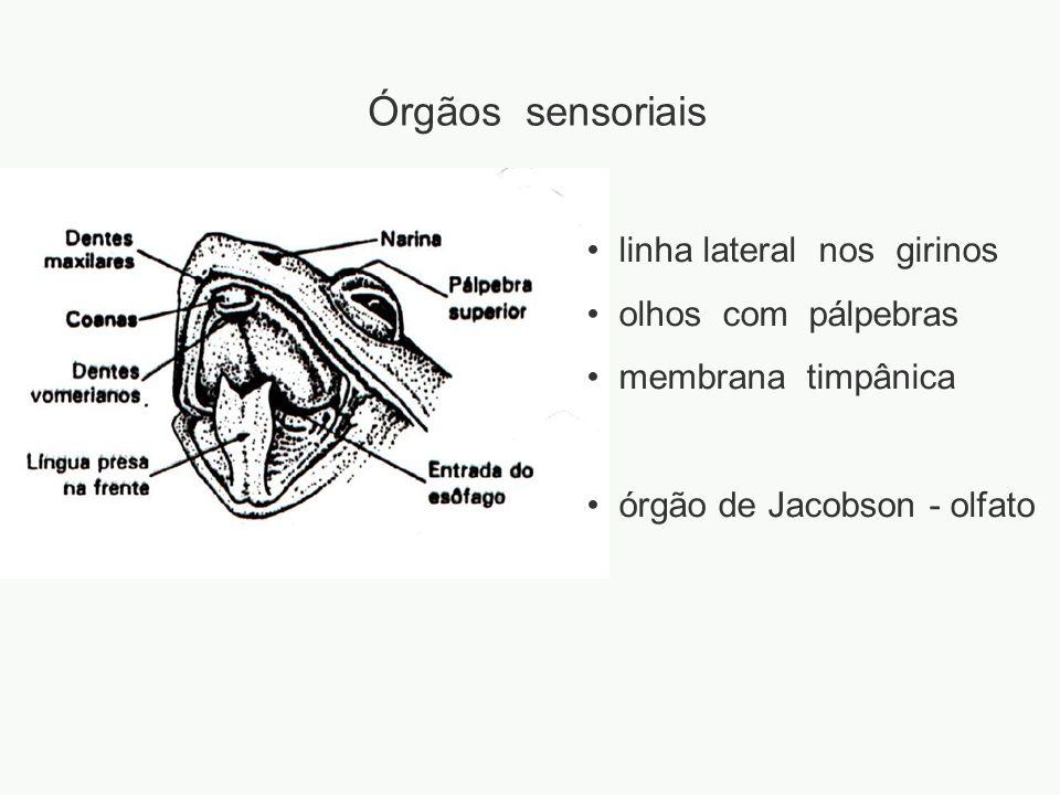 Órgãos sensoriais linha lateral nos girinos olhos com pálpebras