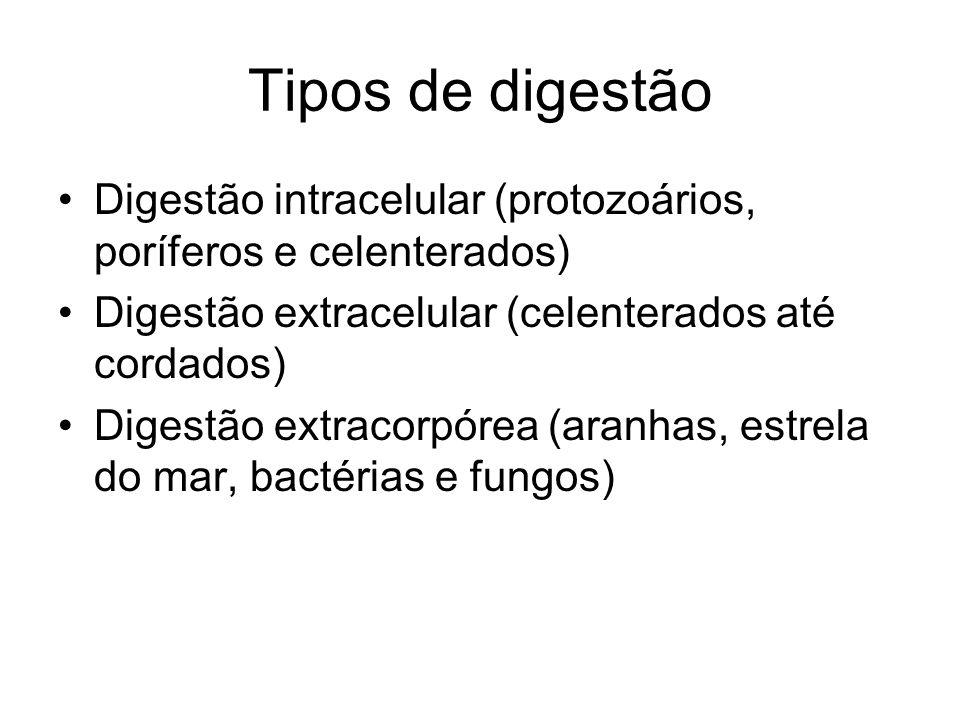 Tipos de digestão Digestão intracelular (protozoários, poríferos e celenterados) Digestão extracelular (celenterados até cordados)