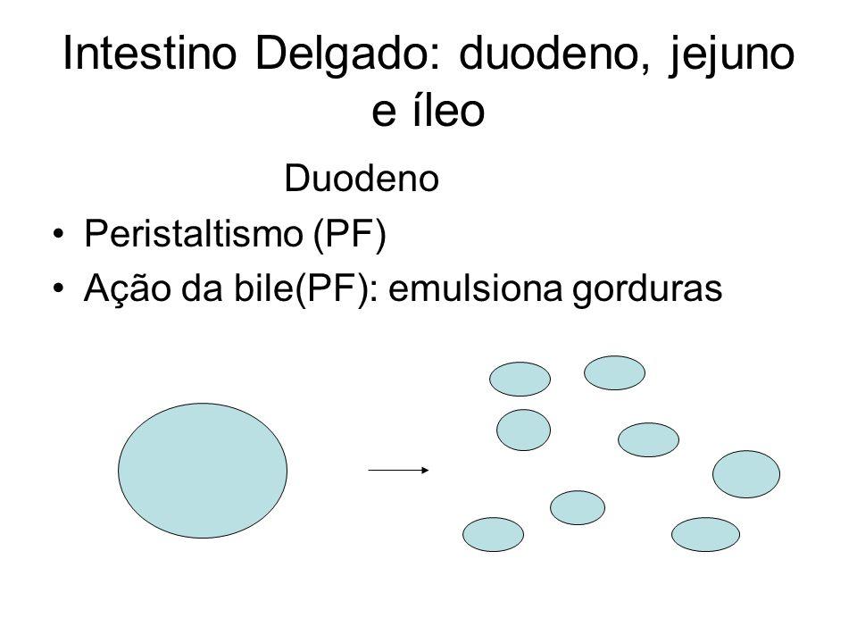Intestino Delgado: duodeno, jejuno e íleo