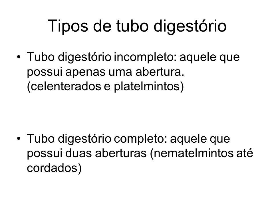 Tipos de tubo digestório