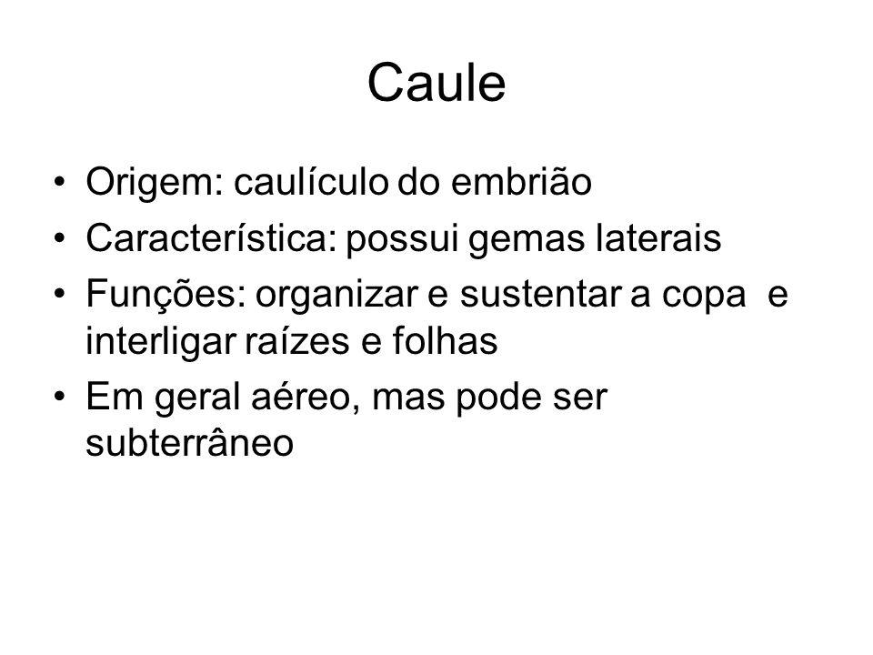 Caule Origem: caulículo do embrião