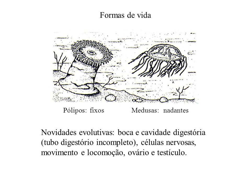 Formas de vida Pólipos: fixos. Medusas: nadantes.