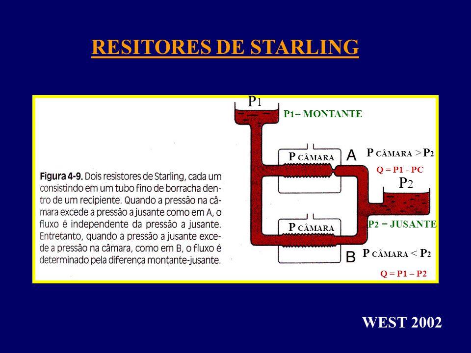 RESITORES DE STARLING P1 P2 WEST 2002 P CÂMARA > P2 P CÂMARA