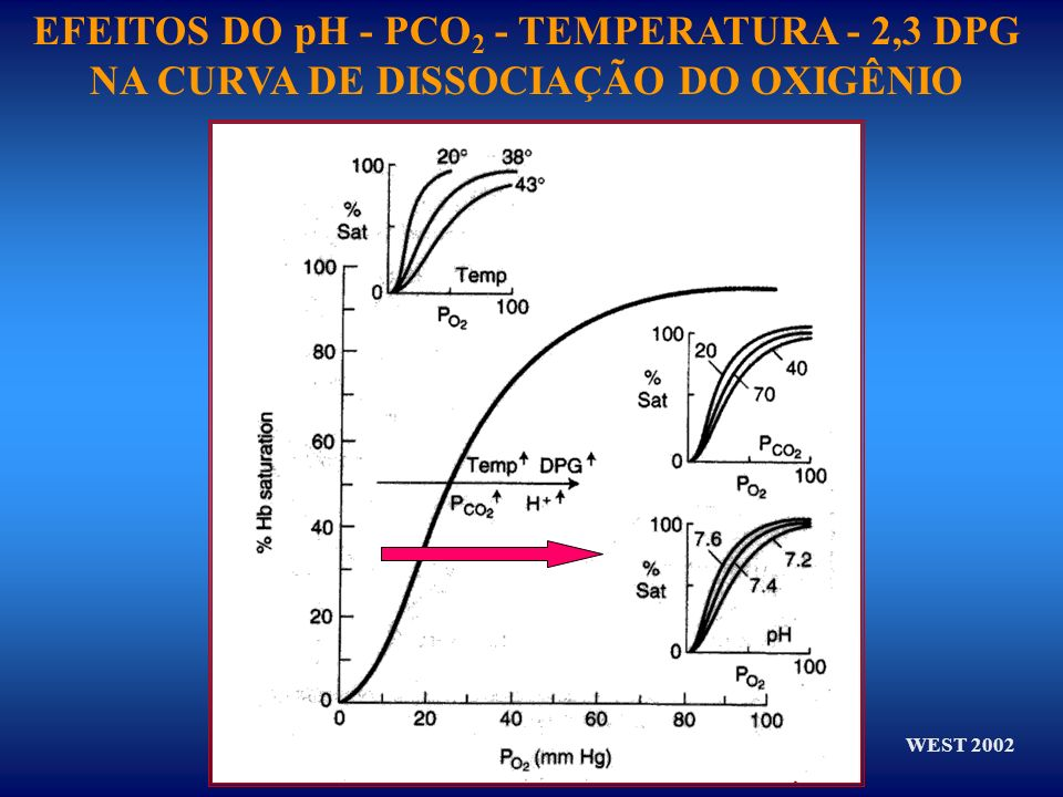 EFEITOS DO pH - PCO2 - TEMPERATURA - 2,3 DPG