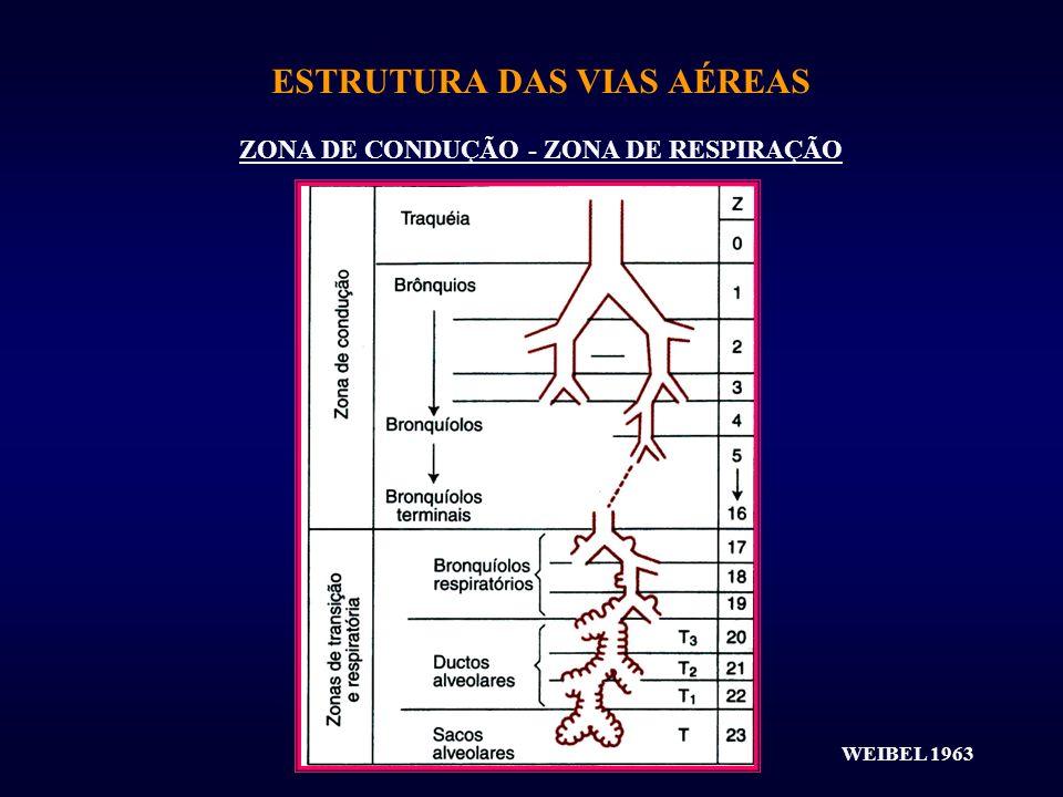 ESTRUTURA DAS VIAS AÉREAS ZONA DE CONDUÇÃO - ZONA DE RESPIRAÇÃO