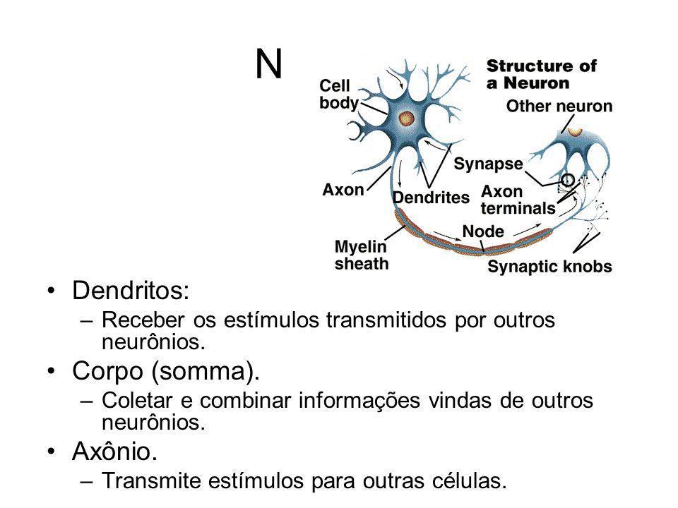 Neurônio Dendritos: Corpo (somma). Axônio.
