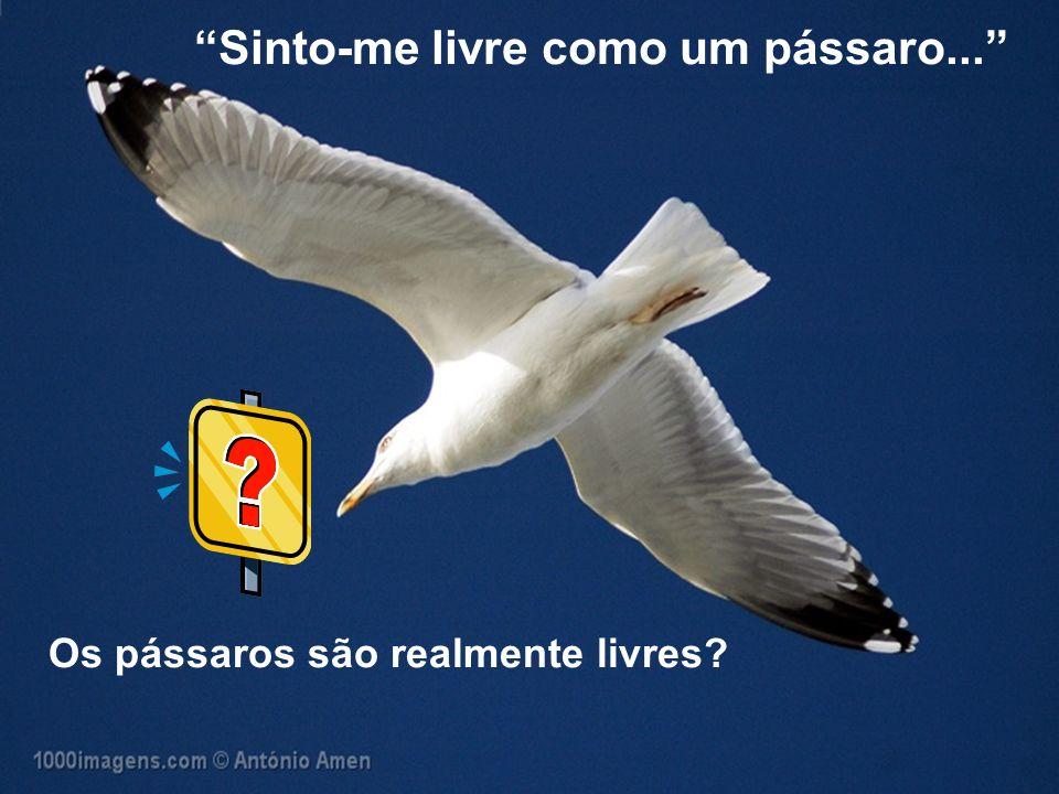 Sinto-me livre como um pássaro...