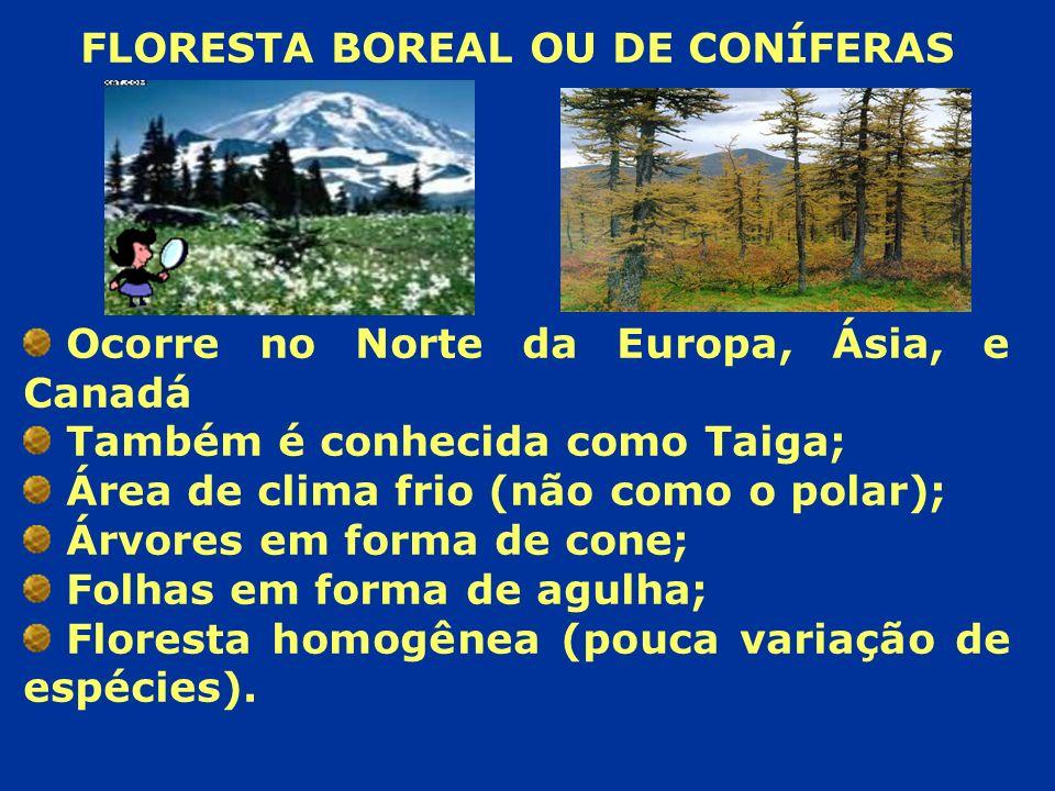 FLORESTA BOREAL OU DE CONÍFERAS