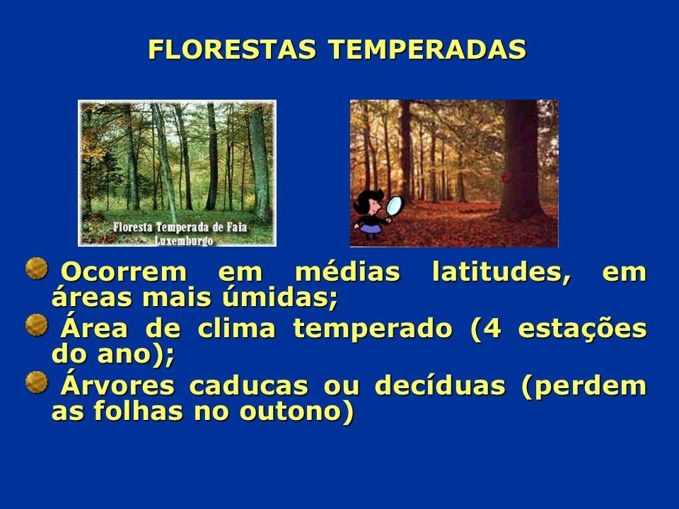 FLORESTAS TEMPERADAS Ocorrem em médias latitudes, em áreas mais úmidas; Área de clima temperado (4 estações do ano);